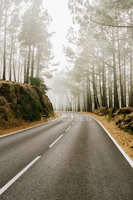 Asphalt road in foggy forest — Stock Photo