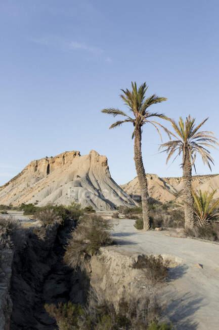 Dos palmeras creciendo en una pequeña duna arenosa en un día soleado - foto de stock