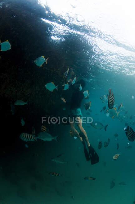 Plongée dans le haut-fond — Photo de stock