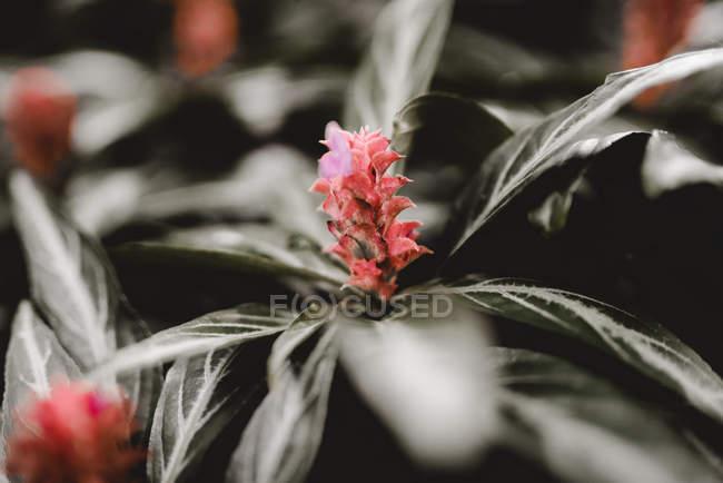 Крупним планом рослини з цвітом і листям, що ростуть на грунті на розмитим фоном — стокове фото