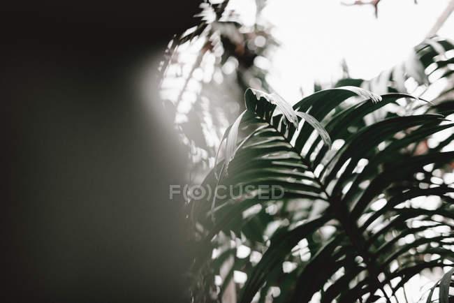 Folha grande verdejante do arbusto de planta no fundo borrado — Fotografia de Stock