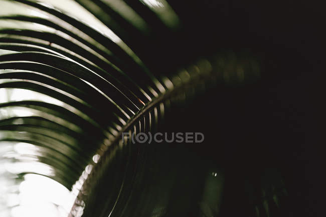Closeup of verdant palm leaf on blurred background — Stock Photo