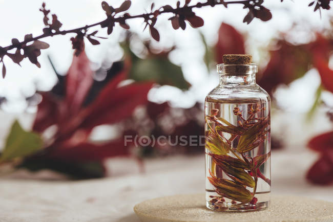 Bottle with fresh plant in liquid between foliage on blurred background — Stock Photo