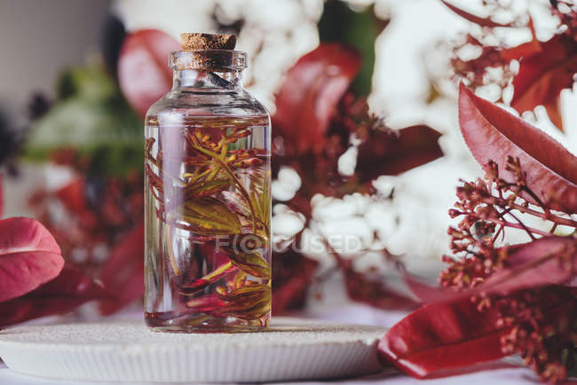 Composition of glass bottle with leaves in liquid between plants with red foliage on blurred background — Stock Photo