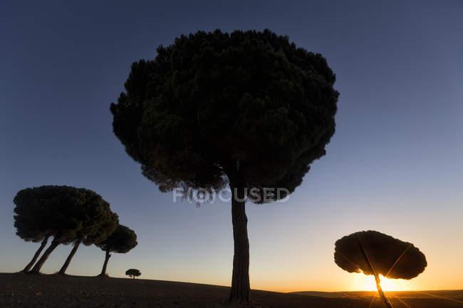 Silhueta das árvores no vale selvagem de encontro ao céu colorido do por do sol — Fotografia de Stock