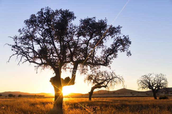 Brillantes rayos de sol que brillan a través de los árboles en el campo bajo el cielo azul claro - foto de stock