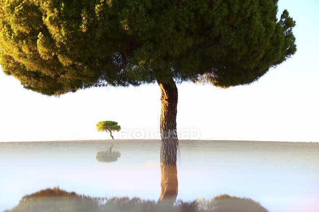 Живописный пейзаж старых деревьев, растущих на пустом газоне с отражением внизу на фоне голубого неба, Испания — стоковое фото