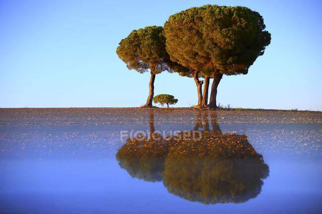 Paysage pictural de vieux arbres poussant sur pelouse vide avec réflexion ci-dessous sur fond de ciel bleu, Espagne — Photo de stock