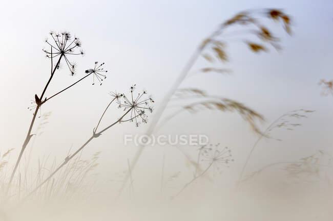 Фотография нескольких золотых растений на фоне ярко-белого неба, Испания — стоковое фото