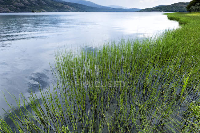Green grass on background of remote lake and mountains under cloudy sky, Villafafila — Stock Photo