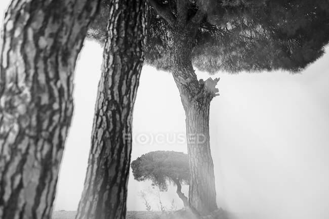 Bela paisagem pictórica de árvores e arbustos desfocados no vale seco contra o céu do pôr-do-sol, Espanha — Fotografia de Stock