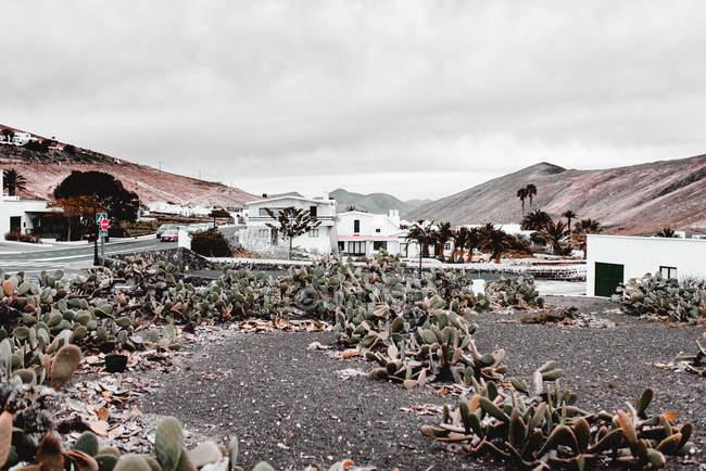 Cactus, casas y colinas de piedra en Lanzarote, Islas Canarias, España - foto de stock