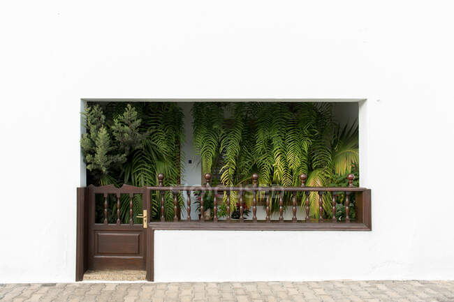 Fresh leaves of tropical green plants decorating terrace of clean white building — Stock Photo