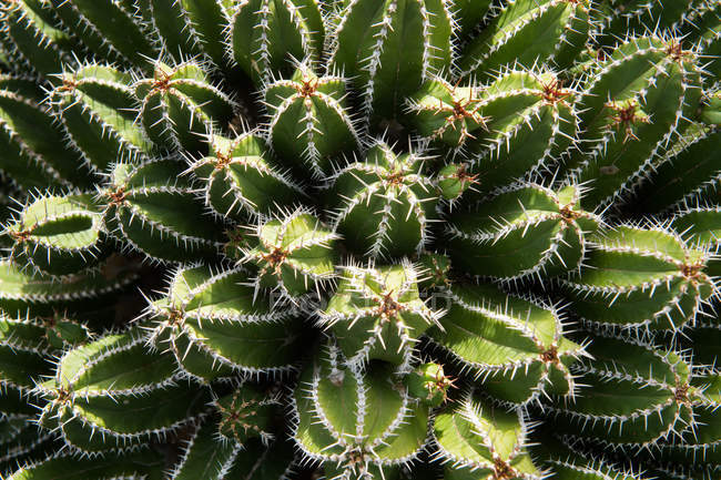 From above amazing prickly cactus growing on sunny day in garden — Stock Photo
