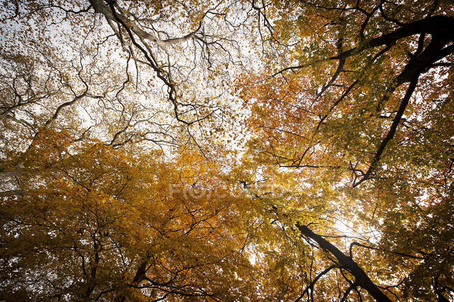 Yellow foliage of trees in autumn park — Stock Photo