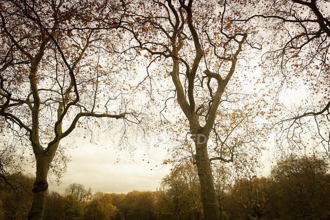 Bare trees in calm autumn park — Stock Photo