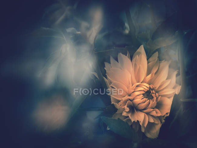 Yellow flower growing in garden on blurred background — Stock Photo
