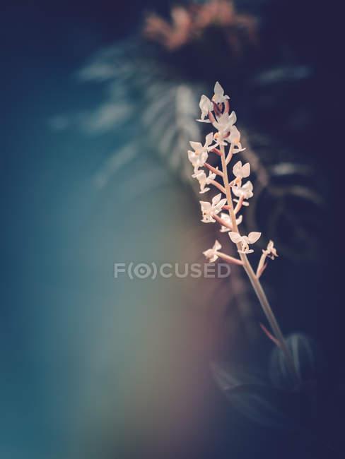 Цветущее растение, растущее в саду на размытом фоне — стоковое фото