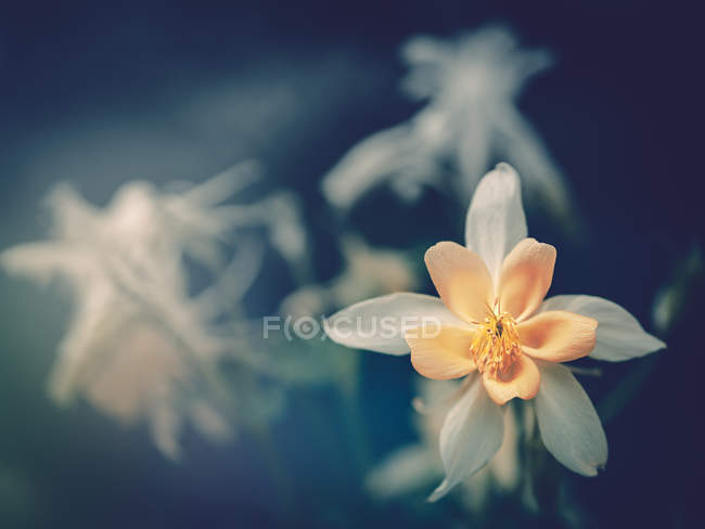 White flower growing in garden on blurred background — Stock Photo