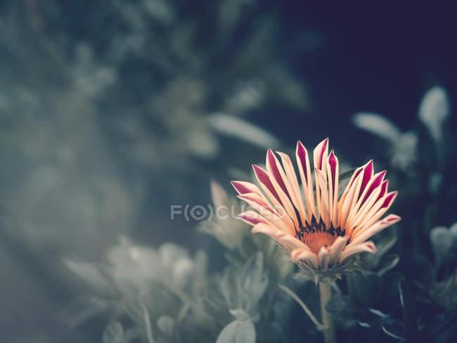 Gros plan de la fleur poussant dans le jardin sur fond flou — Photo de stock