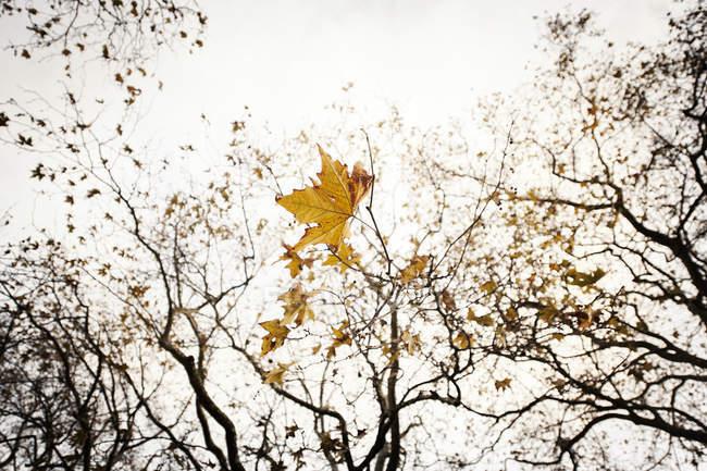 Hojas amarillas en ramas de árboles en otoño - foto de stock