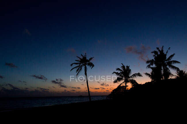 Silhouettes of tropical palms on dark beach near amazing sea against wonderful sundown sky — Stock Photo