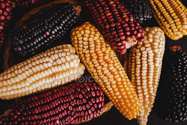 Close-up of dried colorful corn cobs in heap — Stock Photo