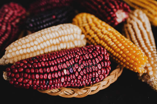 Dried colorful corn cobs in basket on black background — Stock Photo