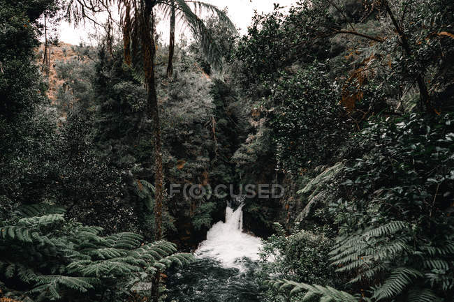 Waterfall splashing in green tropical forest — Stock Photo