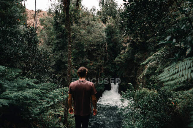 From above back view of male looking at narrow fast river with cascade between green exotic trees of forest — Stock Photo