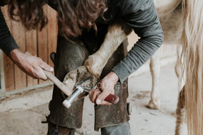 Бічний вид на дорослого коваля з молотком, щоб покласти підкови на копито коня поруч стабільний на ранчо — стокове фото