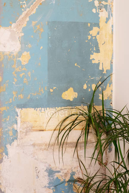 Potted tropical plant near weathered wall with crumbling stucco — Stock Photo