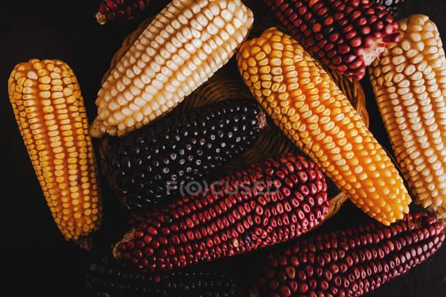 Espigas de milho coloridas secas na cesta no fundo preto — Fotografia de Stock