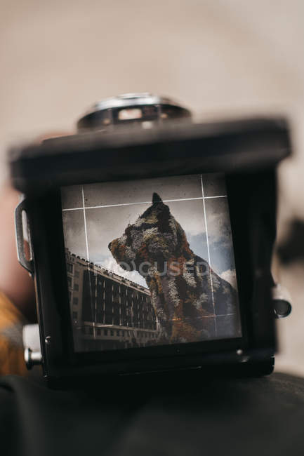 Close-up of traveler with picture of flower statue and street of Bilbao on screen of vintage camera — Stock Photo
