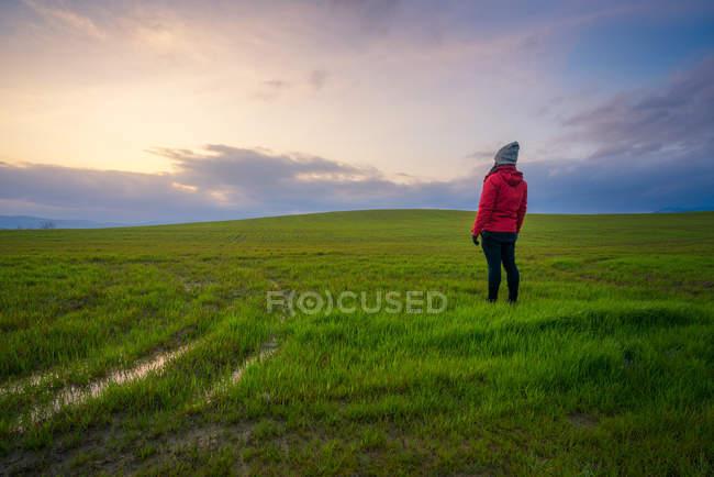 Вид сзади на человека в куртке, стоящего на зеленом поле на закате, Италия — стоковое фото