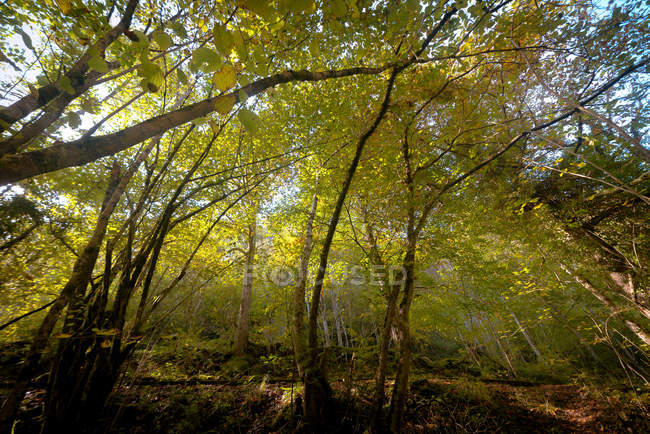 View of green trees growing in forest — Photo de stock