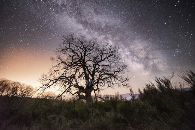 Dry bare tree growing on wild landscape under bright night sky with Milky way — Stock Photo
