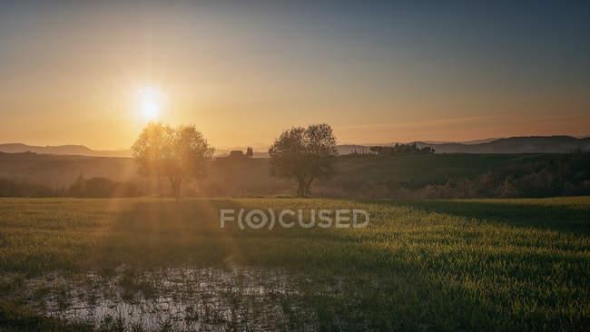 Vista panoramica di infiniti campi verdi con alberi al tramonto, Italia — Foto stock