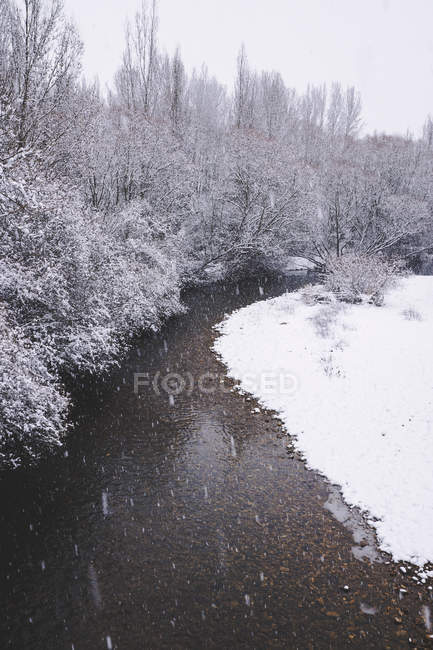 River streaming between snow winter forest — Stock Photo