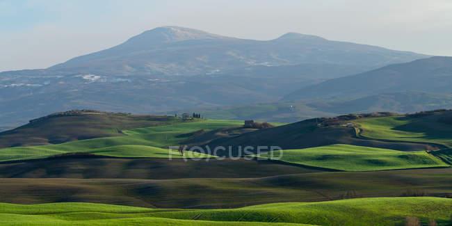 Вид на бесконечные зеленые поля при ярком солнечном свете, Италия — стоковое фото