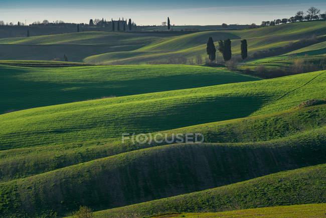 Vista de infinitos campos verdes em luz solar brilhante, Itália — Fotografia de Stock