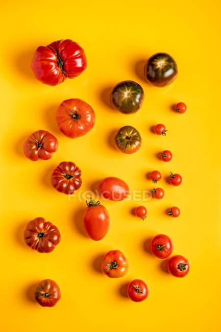 Vários tomates maduros dispersados no fundo amarelo brilhante — Fotografia de Stock