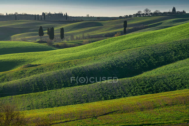 View of endless green fields in bright sunlight, Italy — Stock Photo