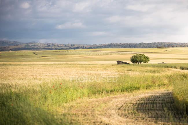 Сельская местность с золотыми полями под облачным небом — стоковое фото