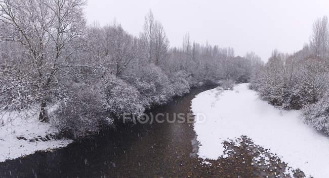 Річка потокова між снігом зимовий ліс — стокове фото