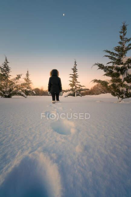 Задня картина жіночого силуету, що йде по сніговій місцевості навколо зелених фірм під мальовничим небом. — стокове фото