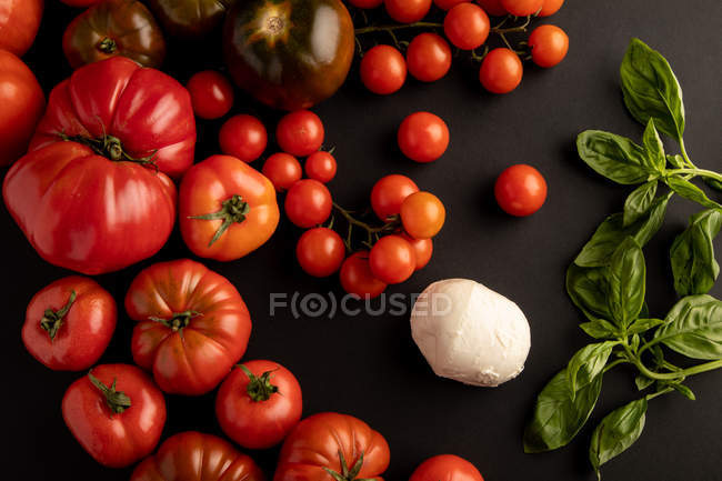 Ripe red tomatoes and basil leaves for salad on black background near fresh mozzarella cheese — Stock Photo