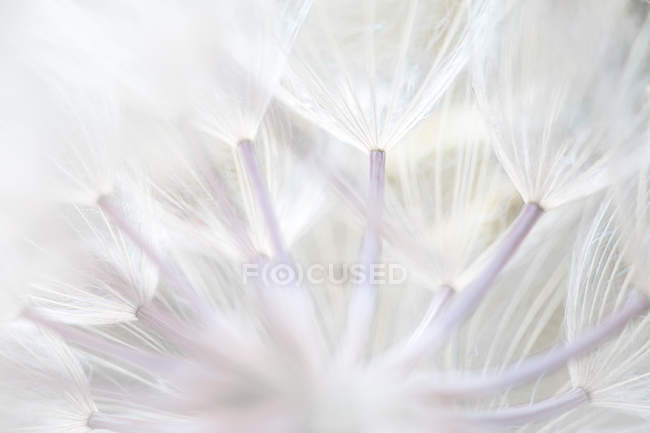 Closeup of delicate soft white stamen — Stock Photo