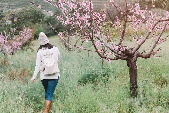 Unrecognizable woman with backpack walking near blooming tree with pink flowers in spring countryside — Stock Photo