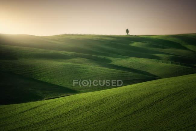 Vue panoramique de champs verts sans fin sous un soleil éclatant, Italie — Photo de stock